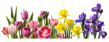 Decorative Panorama Of Spring Flowers In Row