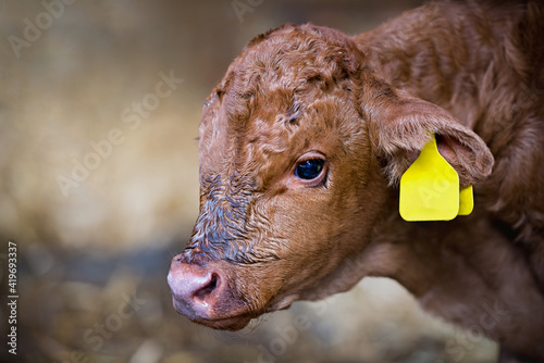 Photo Brown cow standing in a barn