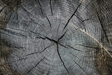 Texture Of The Surface Of The Old Tree Stump, Sawn Wood, Tree Trunk. Close-up. Cracks In The Old Stump.