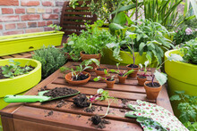 Assorted Potted Plants And Gardening Tools On Balcony