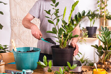 Man Putting Mud With Trowel While Repotting Zamioculcas Zamiifolia Plant In Flower Pot At Home