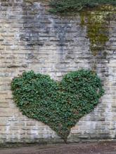 Ivy Growing In Heart Shape On Gray Brick Wall