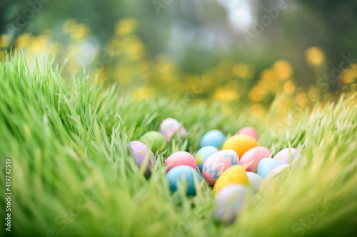 Obraz Colorful painted Easter eggs hidden in grass for an Easter egg hunt. - fototapety do salonu