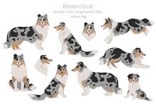 Rough Collie Clipart. Different Poses, Coat Colors Set.