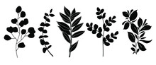 Set Of Leaves Silhouette Of Beautiful Plants №5, Leaves, Plant Design. Vector Illustration .