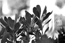 Black And White Nature Close Up In Sicily