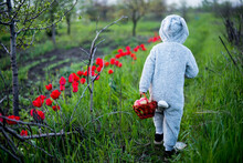 A Child Dressed As A Rabbit Walks On Green Grass With A Basket Of Apples , View Back