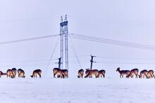 Deer Group In The Winter Meadow