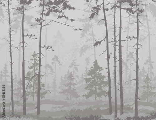 Obraz seamless horizontal background with pine forest. Light colors, black and white  - fototapety do salonu