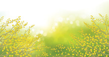 Vector Mimosa Flowers On  Bokeh, Green Background. Spring Landscape.