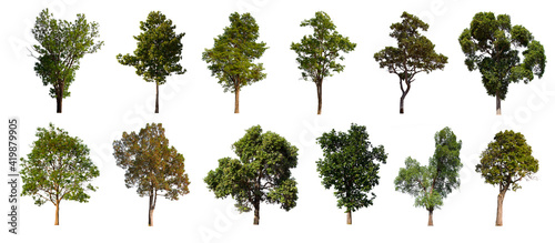 Canvas isolated tree green set is located on a white background