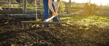 Farmer Working In The Garden With The Help Of A Rake Leveling Plowed Land, On A Sunny Day