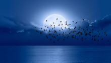 "Night Sky With Moon In The Clouds Silhouette Of Birds In The Foreground ""Elements Of This Image Furnished By NASA"