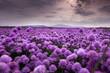 pole pełne kwiatów