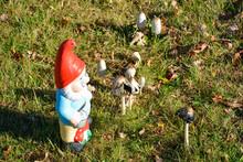Garden Gnome Among Mushrooms