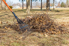 Tree Branches And Leaf Rake In Yard. Lawncare, Lawn Cleaning And Branch Pickup Concept
