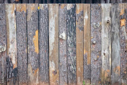 Obraz Texture of vertically parallel trunks and bark - fototapety do salonu