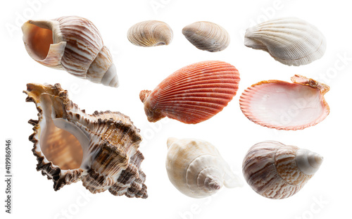 Leinwand Poster A set of beautiful seashells. Isolated on a white background