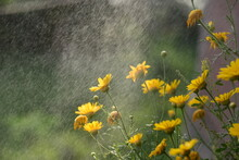 Flowers With Rain Drops And Dew Drops
