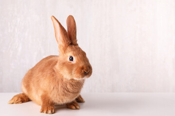 Cute bunny on white table against light background, space for text. Easter symbol