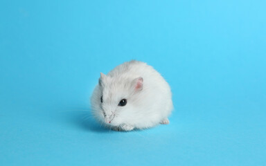 Cute funny pearl hamster on light blue background