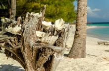 Empty Seashells In Dry Wood On Beach Background