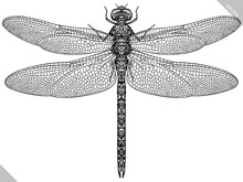 Engrave Isolated Dragonfly Hand Drawn Graphic Illustration