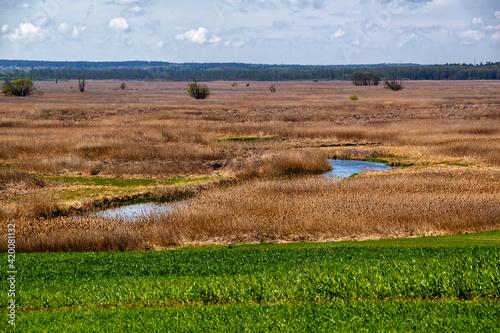 Fototapeta Wiosna nad Narwią, Narwiański Park Narodowy, Podlasie, Polska obraz