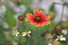 Portrait Of A Beautiful Flower