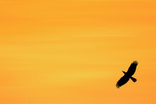 Silhouette Of Birds Flying Freely In The Evening Sky.