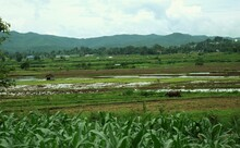 Rice Paddy's Of Northern Myanmar
