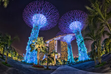 Beautiful Of Colorful Light Show On Supertrees At Gardens By The Bay Near Marina Bay In Singapore.