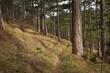 canvas print picture - Pfad mit Wald mit Föhren und Schneeheide in gedeckten Farben im Frühling