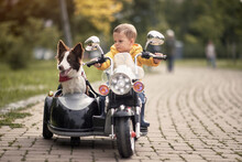 Caucasian Little Boy  Driving Dog In Sidecar Of A Motorcycle Replica In A Park