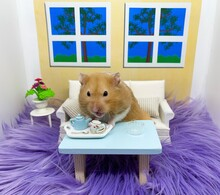 Cute Syrian Hamster Having Tea In A Cozy Room