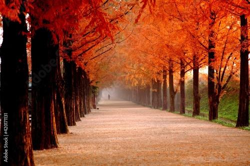 autumn in the park Fototapeta