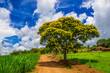 canvas print picture - flowering tree, nature and environment