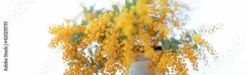 Fotografija 花瓶に活けたミモザの花束 鮮やかな黄色の花 パノラマ クロースアップ 白背景 日本