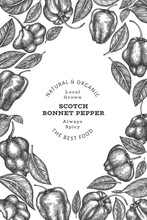 Hand Drawn Sketch Style Scotch Bonnet Pepper Banner. Organic Fresh Vegetable Vector Illustration. Retro Cayenne Pepper Design Template