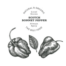 Hand Drawn Sketch Style Scotch Bonnet Pepper. Organic Fresh Food Vector Illustration Isolated On White Background. Retro Plant Illustration. Engraved Botanical Style Cayenne Pepper.
