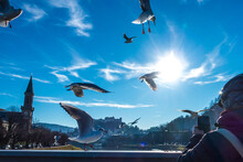 Seagulls Flying Over The River Salzach In Salzburg