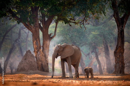 Elephant with young baby Fototapet