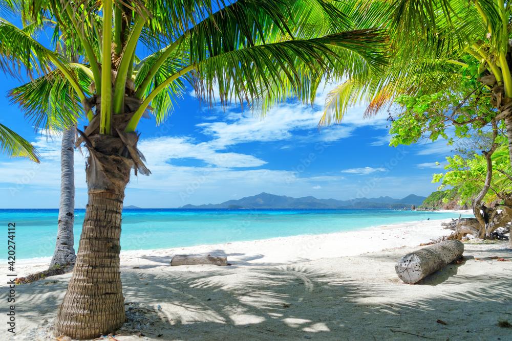 Fototapeta beach with palm trees