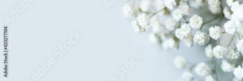 Canvas Print White flowers of the gypsophila