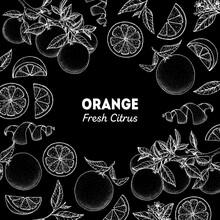 Orange Hand Drawn Package Design. Vector Illustration. Orange Sketch For Menu Design, Brochure Illustration. Black And White Design. Citrus Orange Frame Illustration. Can Used For Packaging Design.