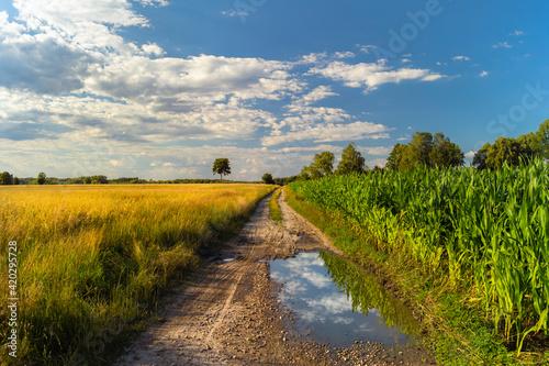 Fototapeta polna droga, lato kałuża obraz