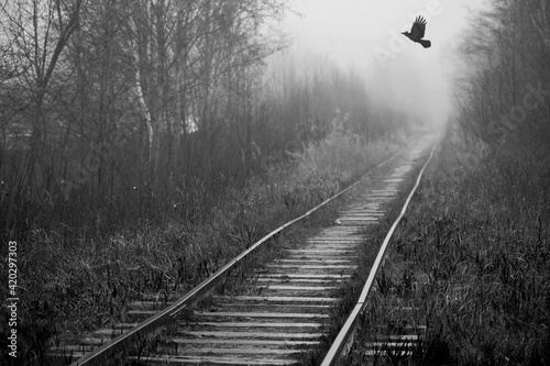 Crow flies over empty abandoned railway Fotobehang
