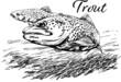 Pstrąg w wektorach, rysunek czarno-biały