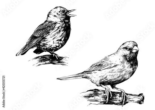 Fototapeta Ptaki, rysunek czarno-biały obraz