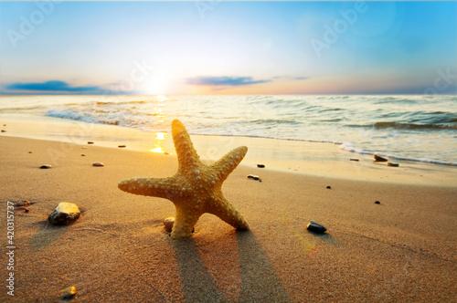 Fototapety, obrazy: Starfish on the beach